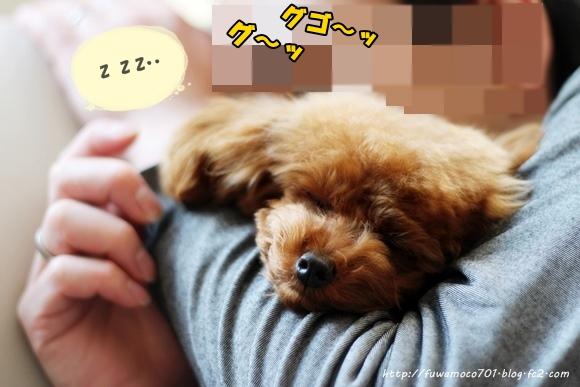 モコ寝てる