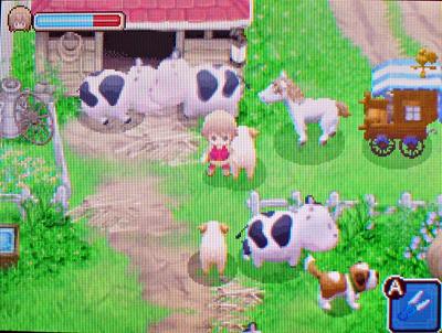 牧場・牛羊