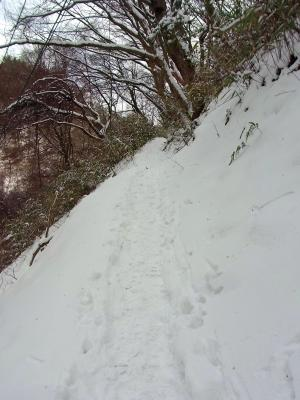 12020501葛城山の道の景色