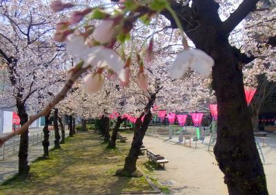 120405九軒の桜