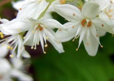 120531花は咲く