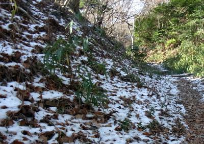 20120108 落葉の雪道