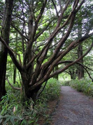 神降地の木々