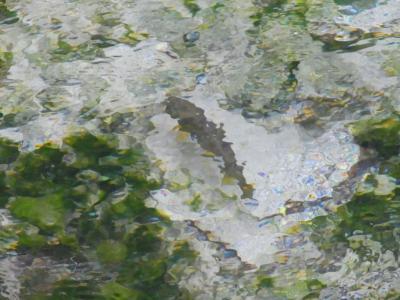 岩魚泳ぐ沢の透明