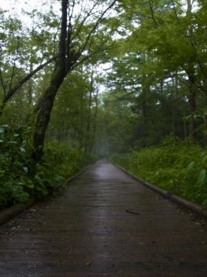上高地の小道1