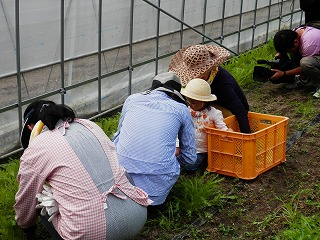 農業体験1