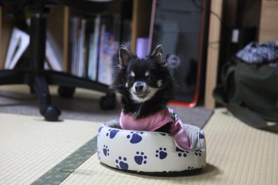 IMG_0001ぷりん (1)
