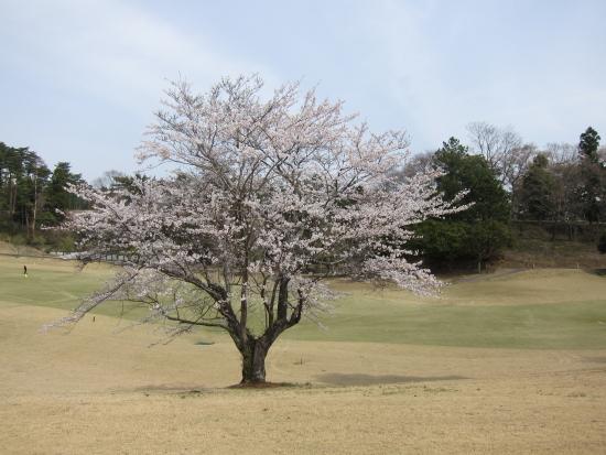 ゴルフ野球 003