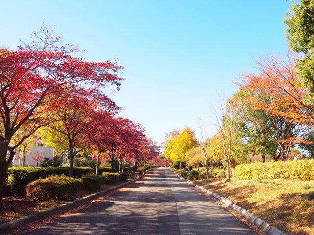 つつじが丘公園02