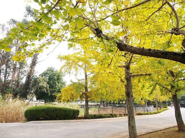 水城公園7