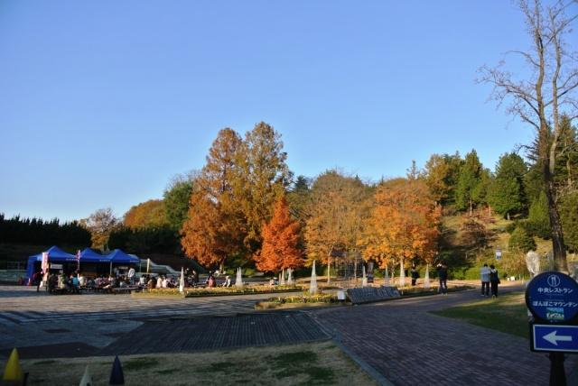 国営 武蔵丘陵森林公園 (1)