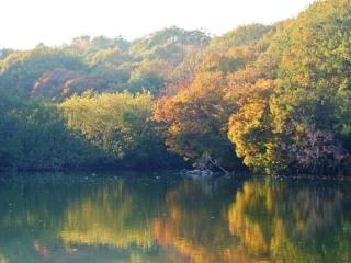 国営 武蔵丘陵森林公園 (3)