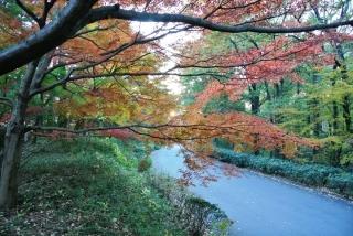 国営 武蔵丘陵森林公園 (11)