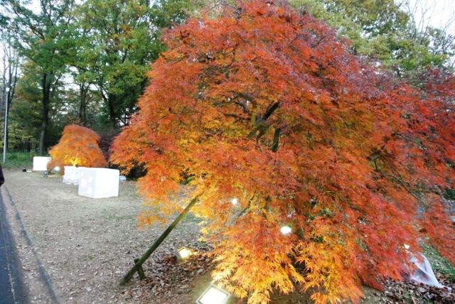 国営 武蔵丘陵森林公園 (12)