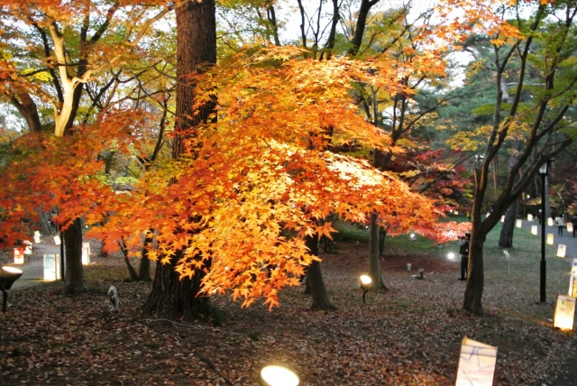 国営 武蔵丘陵森林公園 (13)