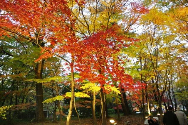 国営 武蔵丘陵森林公園 (14)