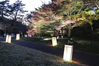 国営 武蔵丘陵森林公園 (21)