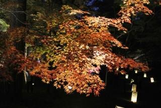 国営 武蔵丘陵森林公園 (23)
