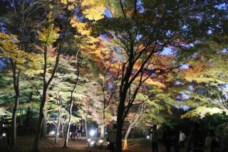 国営 武蔵丘陵森林公園 (24)