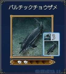チョウザメ