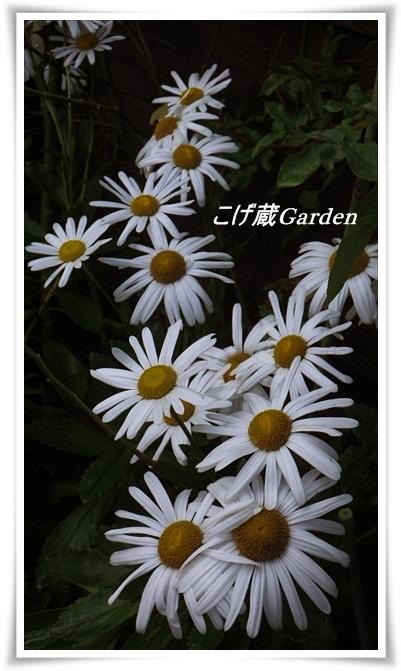 IMGP9695_R.jpg