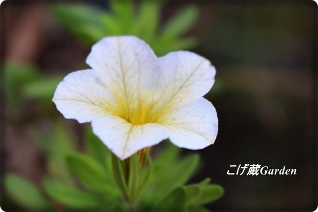IMG_0886_R.jpg