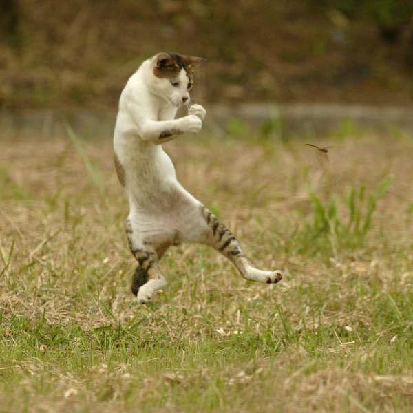 トンボと戦う動物