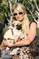 11794_Paris_Hilton-small.jpg