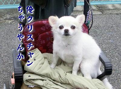131210-あ銀ちゃん-2