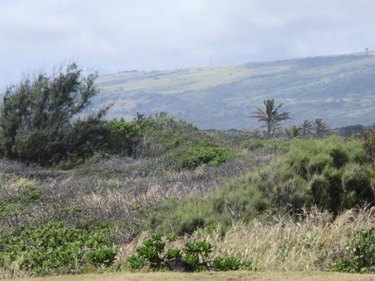hawaii_001.jpg