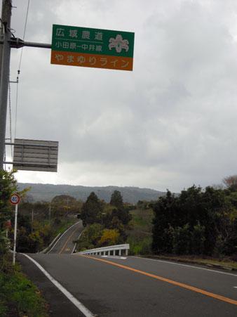 DSCN山百合ライン5408