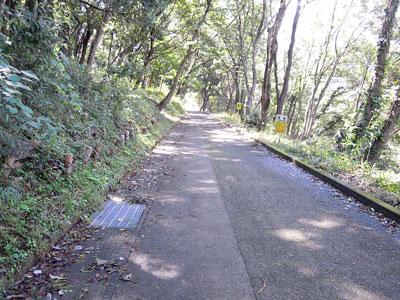 厳島湿生園への道