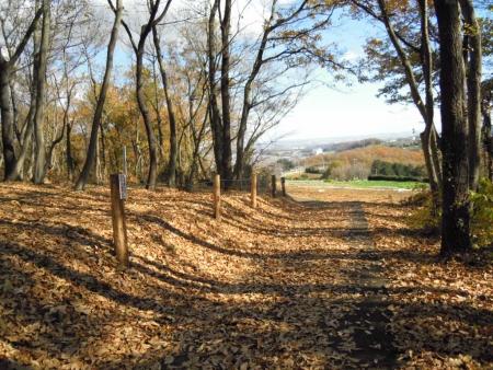 渋沢丘陵落ち葉の道