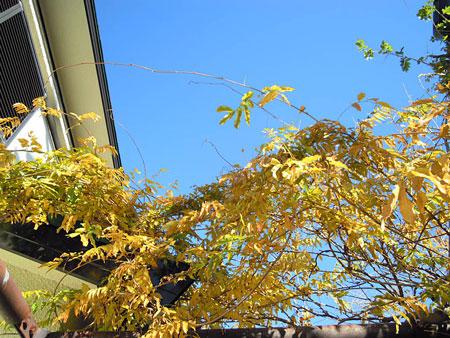富士の花の葉っぱ