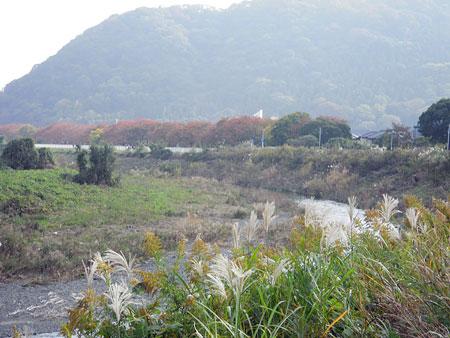 花水川沿い