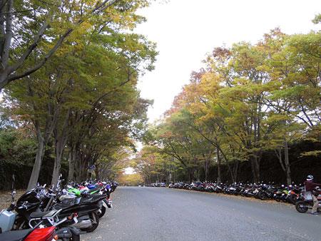 東海大学並木道