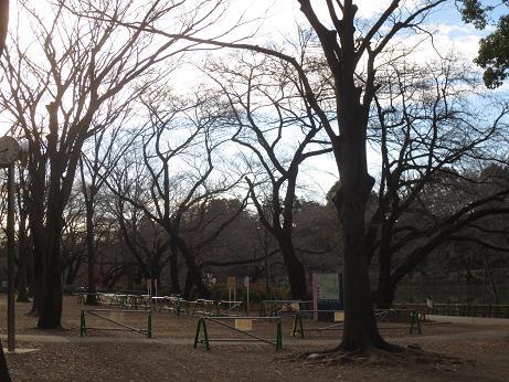 吉祥寺落葉井の頭公園