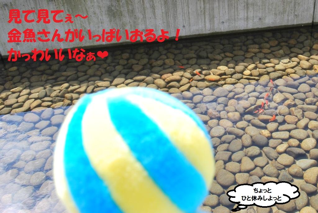 DSC_0193_20121007123101.jpg
