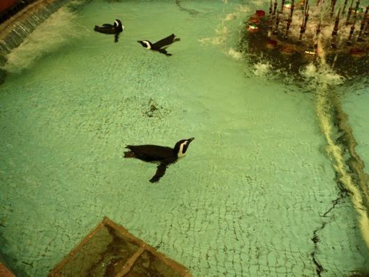 アドベンチャーワールド エントランスドーム噴水にペンギン