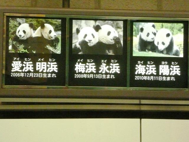 アドベンチャーワールド パンダゾーン 歴代パンダ