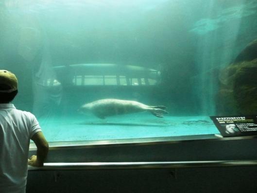 アドベンチャーワールド 海獣館