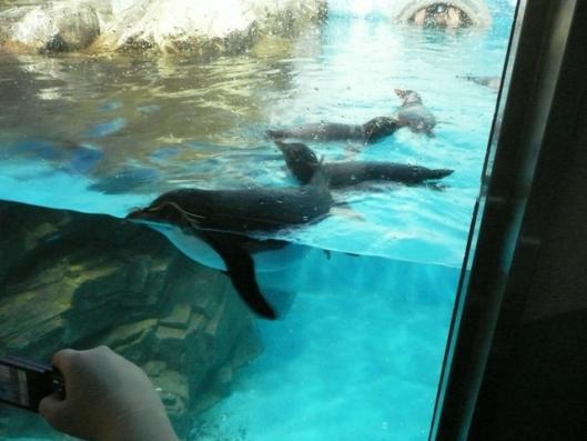 アドベンチャーワールド 海獣館 ペンギン