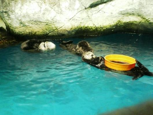 アドベンチャーワールド 海獣館 ラッコ