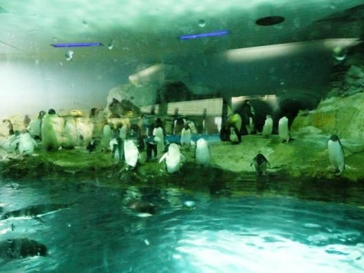アドベンチャーワールド 海獣館 エンペラーペンギン