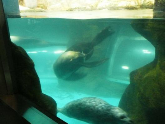 アドベンチャーワールド 海獣館 アシカ
