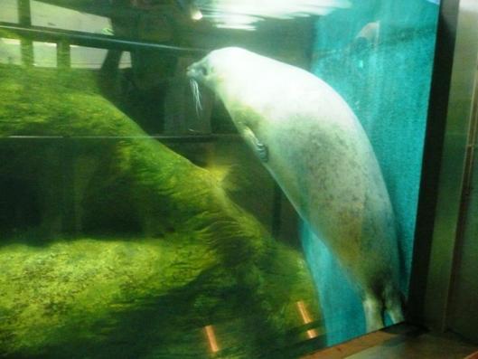 アドベンチャーワールド 海獣館 アザラシ