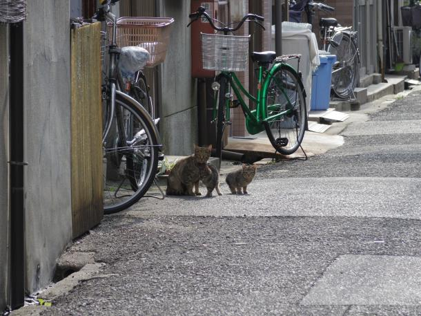 猫17,18,19