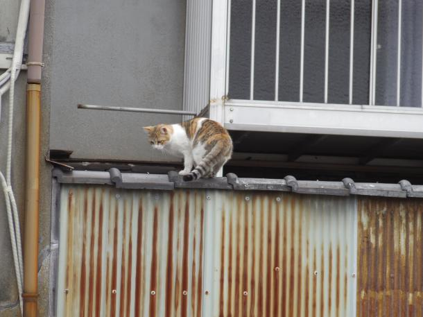 猫32,33