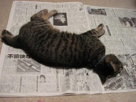 広げた新聞