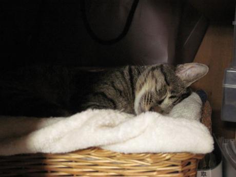押入れで寝るジンジャー